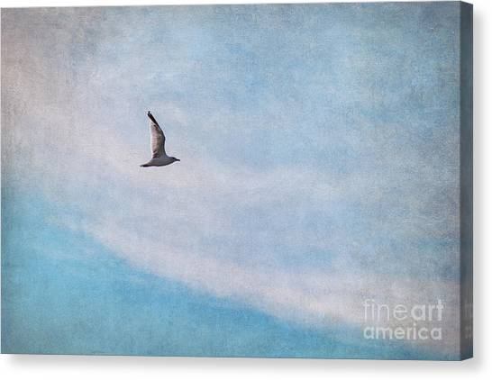 Sea Bird Canvas Print - Freedom by Angela Doelling AD DESIGN Photo and PhotoArt