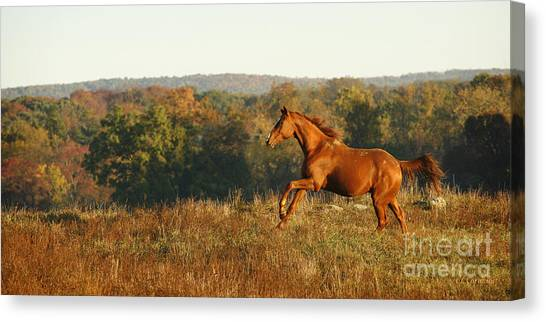 Freedom In The Late Afternoon Canvas Print