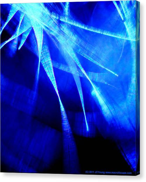 Freedom Spirit Canvas Print by JCYoung MacroXscape