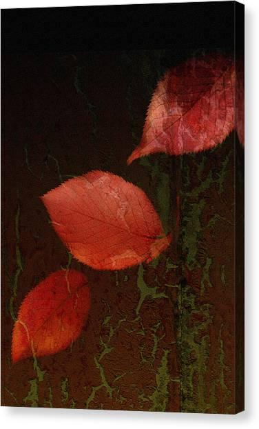 Woodland Canvas Print - Freefall by Bonnie Bruno