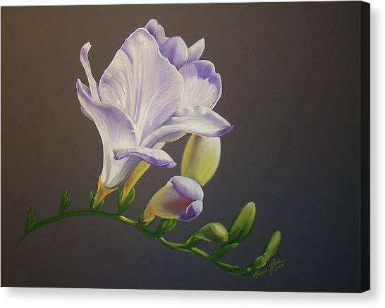 Freesia 1 Canvas Print by Brandi York