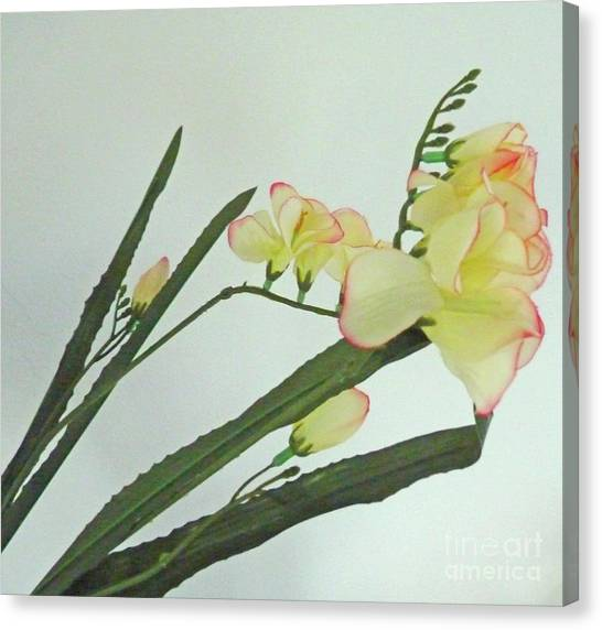 Freesia Blossoms In Pastel Colors Canvas Print
