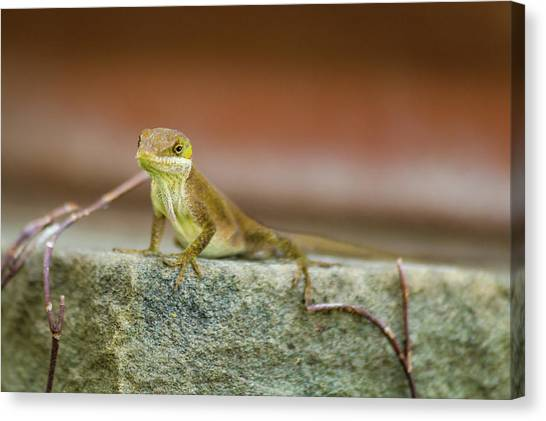 Lizards Canvas Print - Freeze  by Kathy Malecki