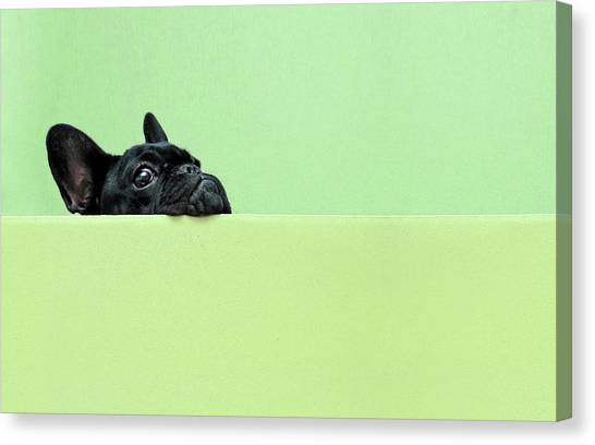 Pets Canvas Print - French Bulldog Puppy by Retales Botijero