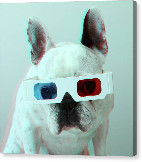 Dog Canvas Print - French Bulldog With 3d Glasses by Retales Botijero