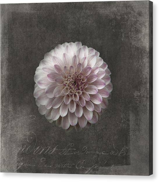 Canvas Print - Fluer D'amour - French Dahlia by Amanda Lakey