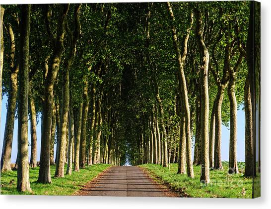 French Tree Lined Country Lane Canvas Print