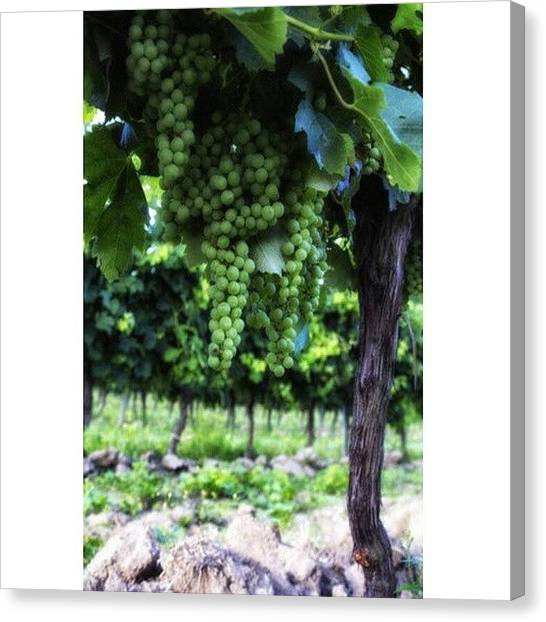 Wine Canvas Print - French Vineyard by Georgia Fowler