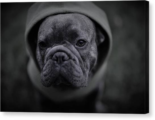 French Bull Dogs Canvas Print - Frenchie In Black And White by Brian Redgrave