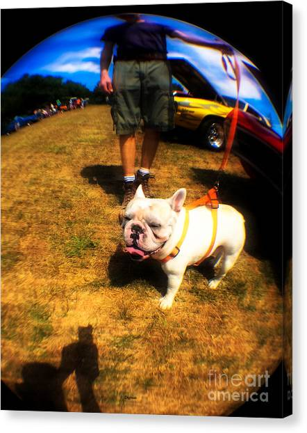 French Bull Dogs Canvas Print - Frenchy At The Car Show  by Steven Digman