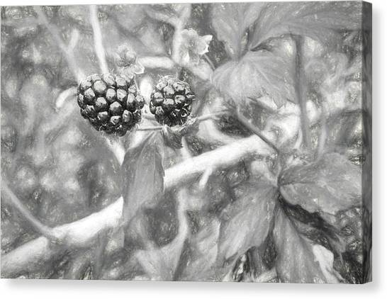 Wild Berries Canvas Print - Fresh Alabama Blackberries In Black And White by JC Findley