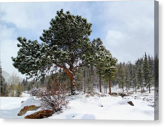 Fresh Mountain Snow Canvas Print