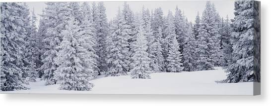 Nm Canvas Print - Fresh Snow On Pine Trees Taos County Nm by Panoramic Images