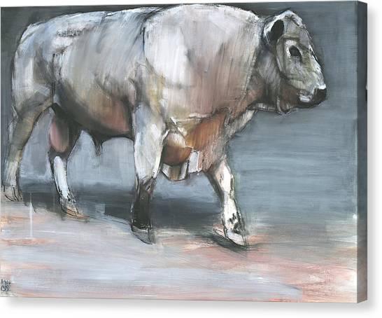 Murky Canvas Print - Fresno   Galloway Bull by Mark Adlington
