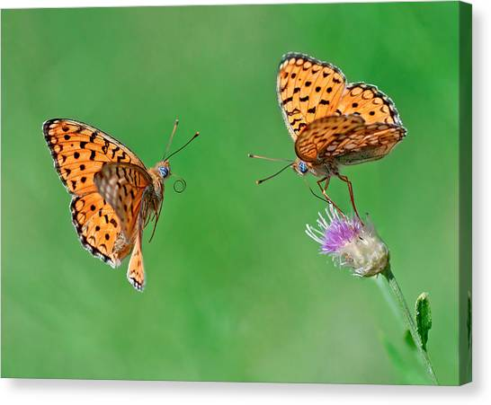 Bug Canvas Print - Friendly Lunch by Ali Akbar Khandan