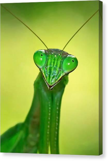 Friendly Mantis Canvas Print