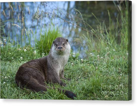 Friendly Otter Canvas Print by Philip Pound