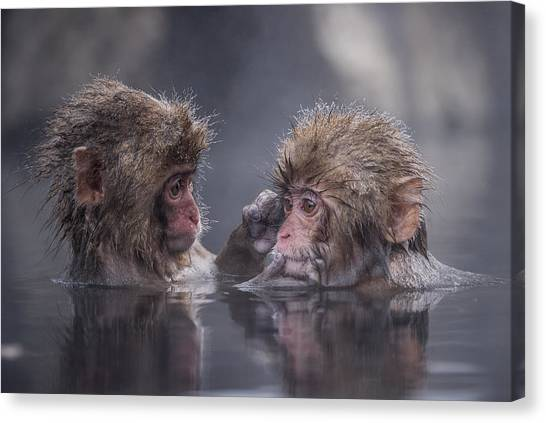 Apes Canvas Print - Friends by Takeshi Marumoto