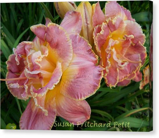 Frills Canvas Print by Sandy Collier