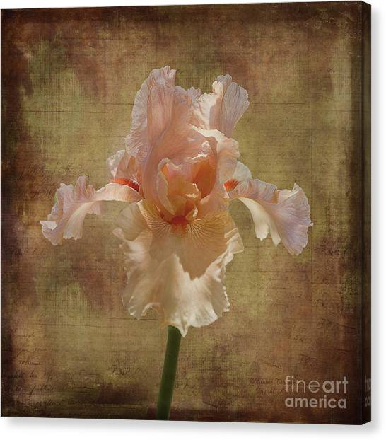 Frilly Iris Canvas Print