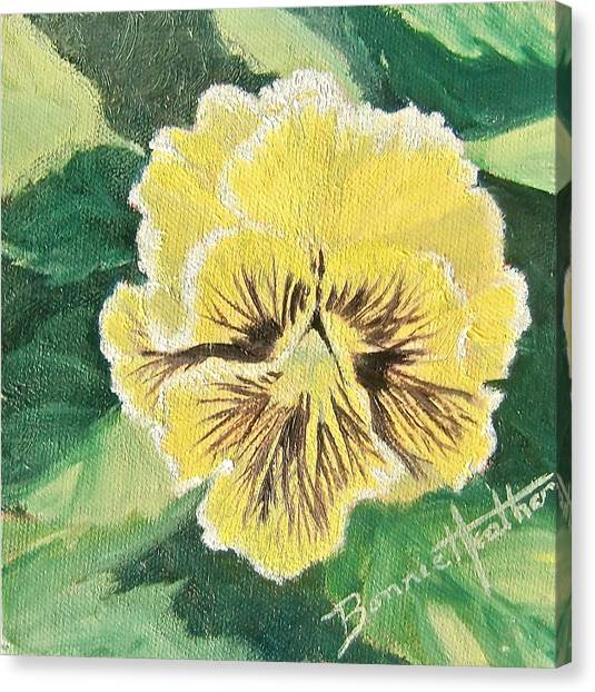 Frilly Yellow Pansy Canvas Print