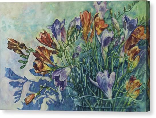 Frishias Canvas Print