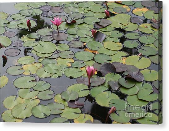 Frog Gardens Canvas Print by Amy Holmes