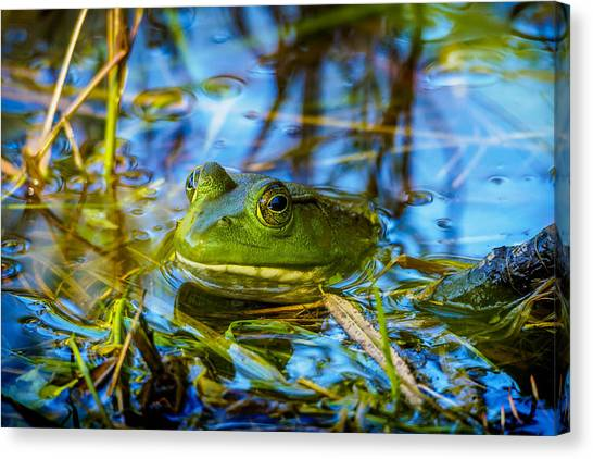 Frog In My Pond Canvas Print