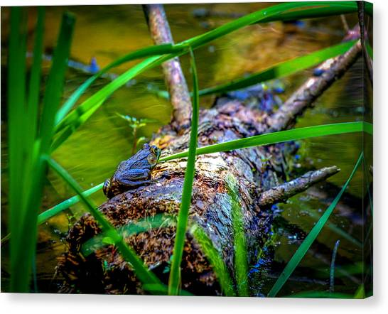 Frog On A Log 1 Canvas Print