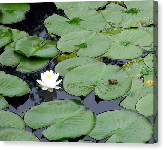 Frog On Lily Pad Canvas Print