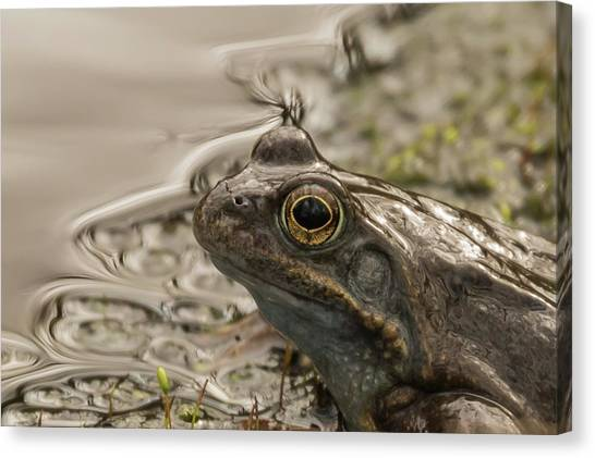 Frog Portrait Canvas Print
