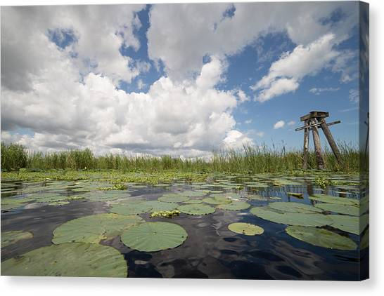 From A Frog's Point Of View - Lake Okeechobee Canvas Print