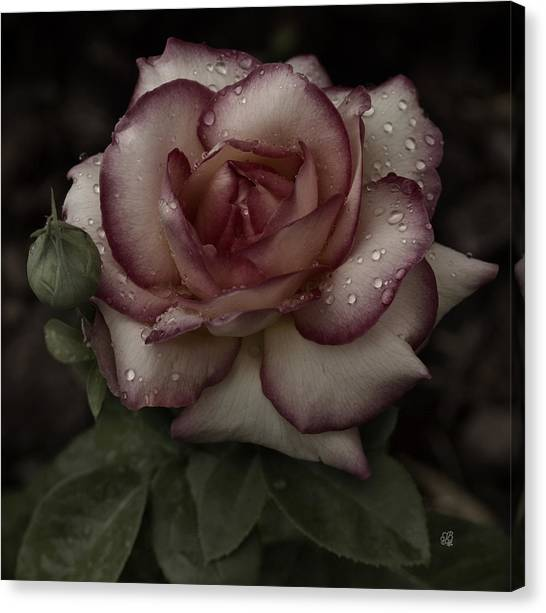 From Me To You Winter Rose Canvas Print