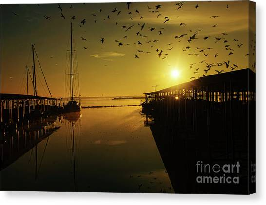 From Shadows Canvas Print