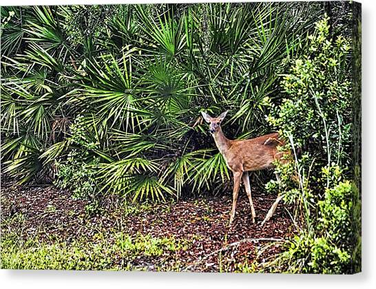 Okefenokee Canvas Print - From The Palmetto Bushes by Jan Amiss Photography