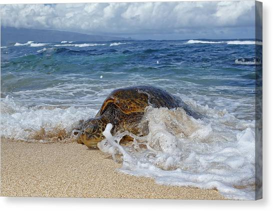 From The Sea Canvas Print by Peter Stahl