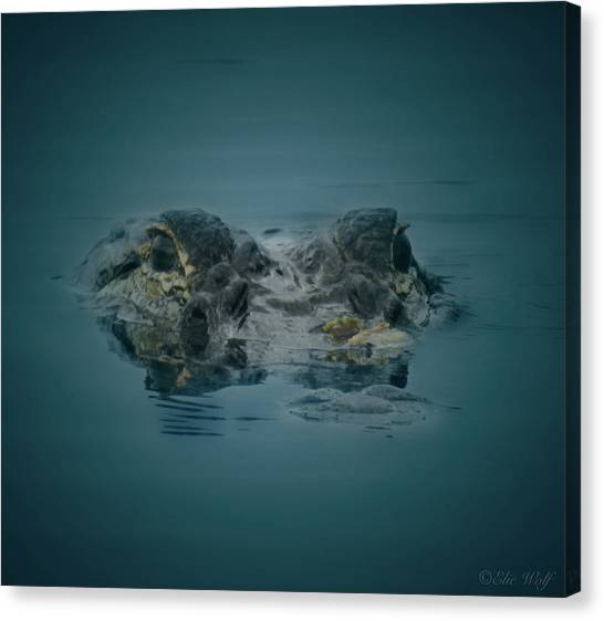 From The Series I Am Gator Number 6 Canvas Print