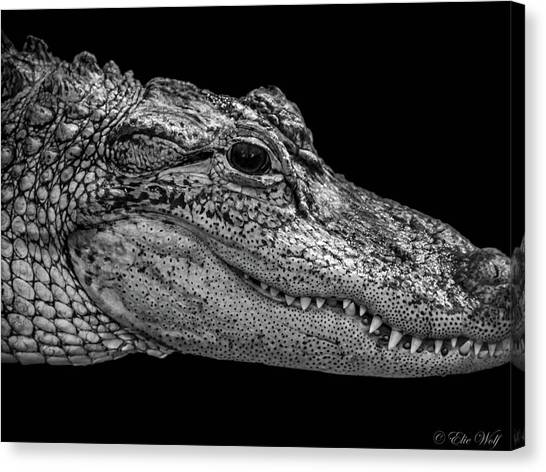 From The Series I Am Gator Number 9 Canvas Print
