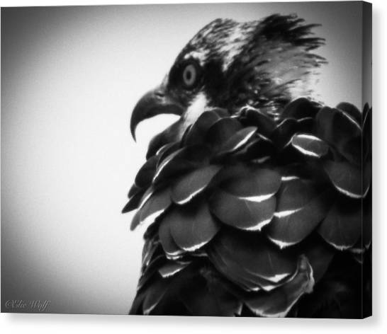 From The Series The Osprey Number 4 Canvas Print