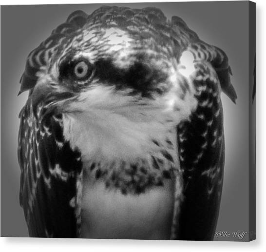 From The Series The Osprey Number Two Canvas Print
