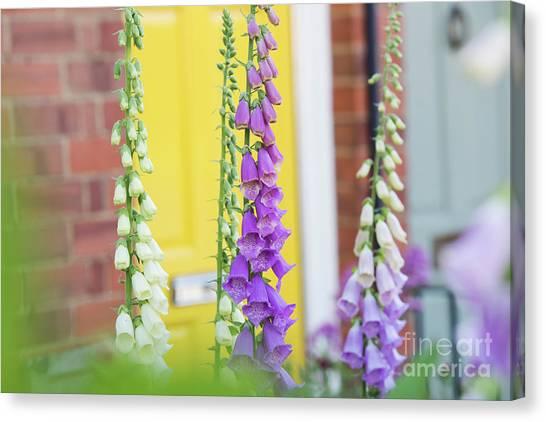 Foxglove Flowers Canvas Print - Front Garden Foxgloves by Tim Gainey