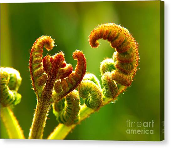 Frond Fern Canvas Print