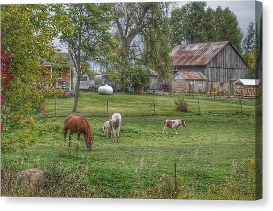 1008 - Front Yard Ponies Canvas Print