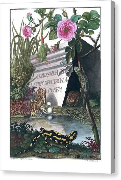 Frontis Of Historia Naturalis Ranarum Nostratium Canvas Print