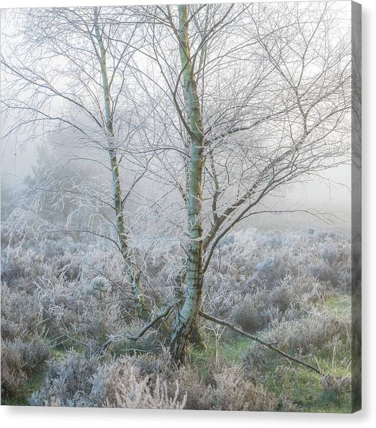 Sherwood Forest Canvas Print - Frost by Chris Dale