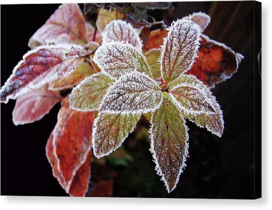 Frost Cluster Canvas Print