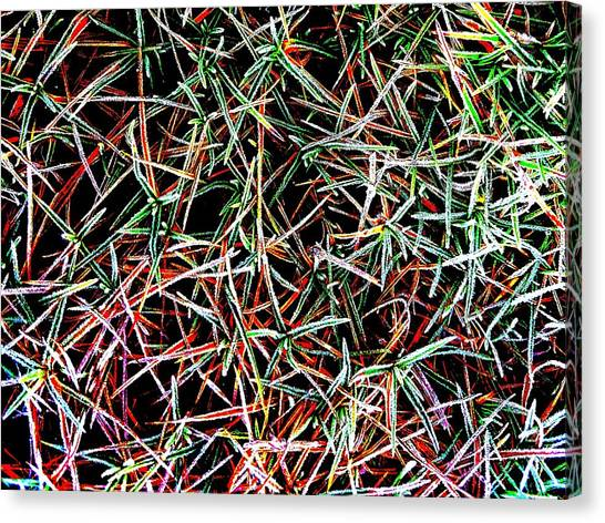 Frost On The Grass Canvas Print