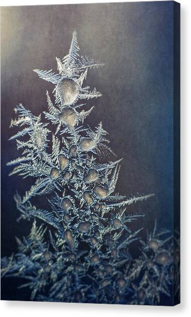 Symmetrical Canvas Print - Frost by Scott Norris