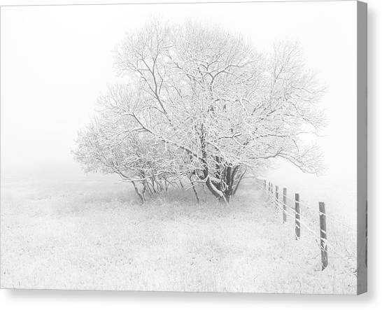Frosted Canvas Print