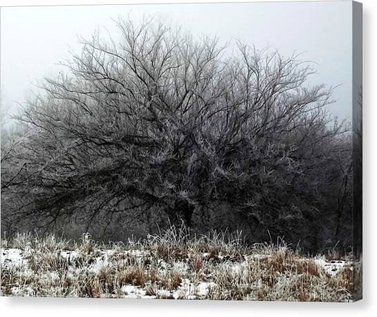 Canvas Print featuring the photograph Frosted Elm by Shelli Fitzpatrick